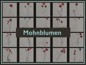mohnblumen